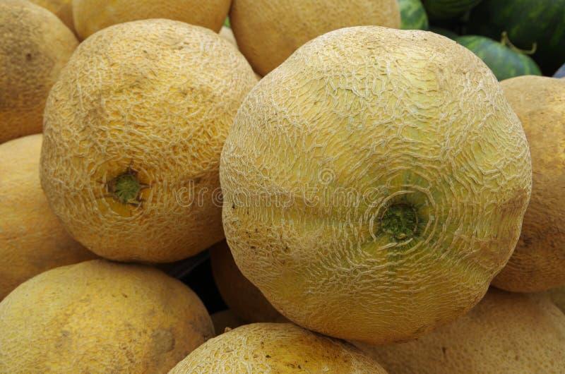 Cantaloupe grande entreprise mûre images stock