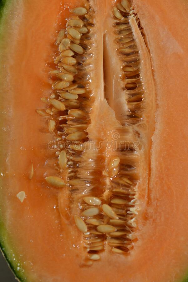 15 257 Cantaloupe Slice Photos Free Royalty Free Stock Photos From Dreamstime Cantaloupe is a type of melon with a greenish skin and bright orange flesh. 15 257 cantaloupe slice photos free royalty free stock photos from dreamstime