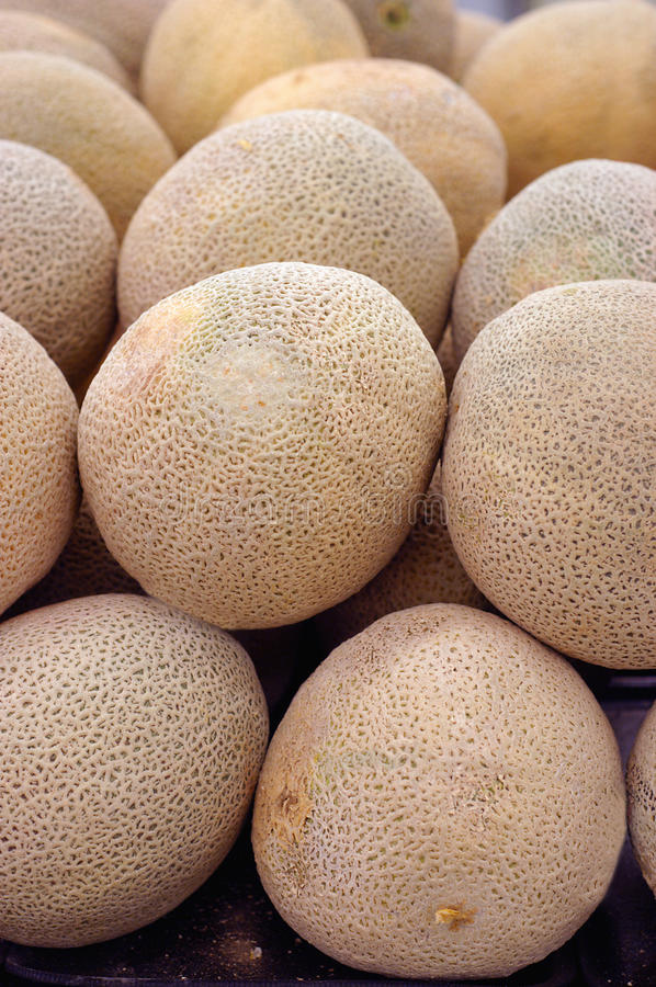 Cantaloupe melon. S for sale at the farmers market stock photo