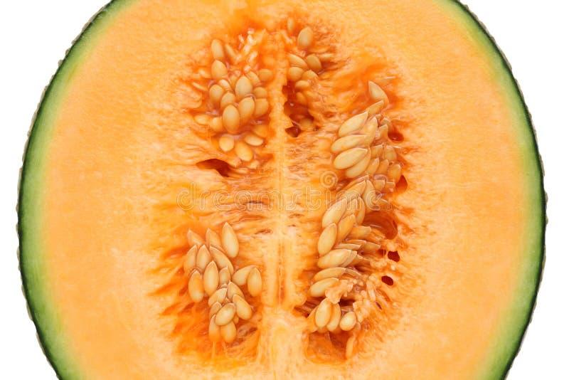 Cantaloupe melon. Close up of ripe cantaloupe melon royalty free stock photography