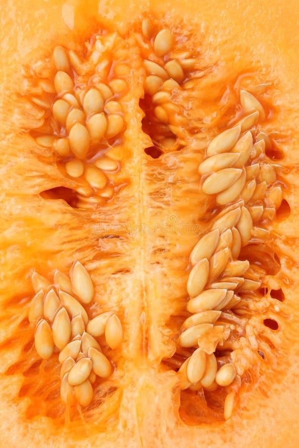 Cantaloupe melon. Close up of ripe cantaloupe melon stock images