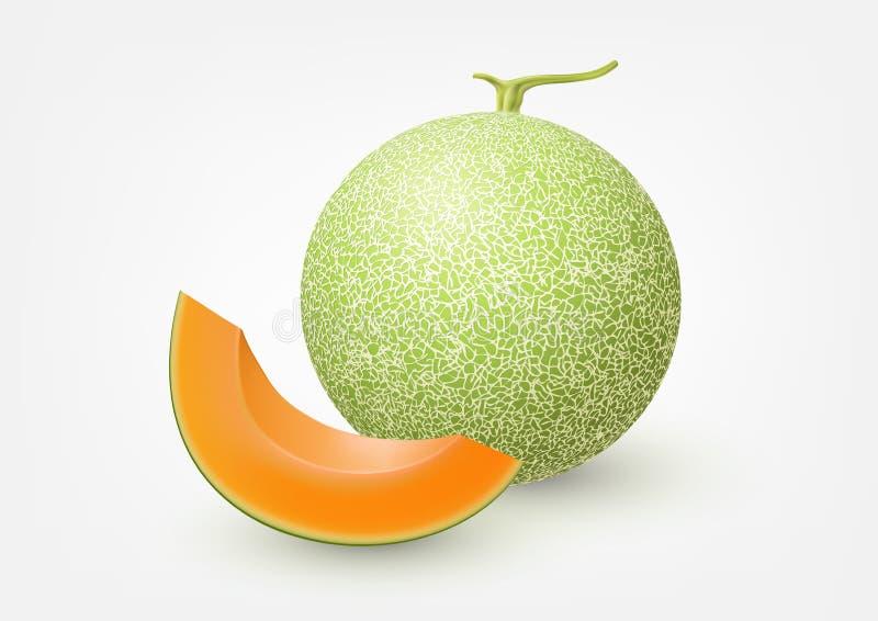Cantaloupe melon, fruit vector illustration royalty free illustration