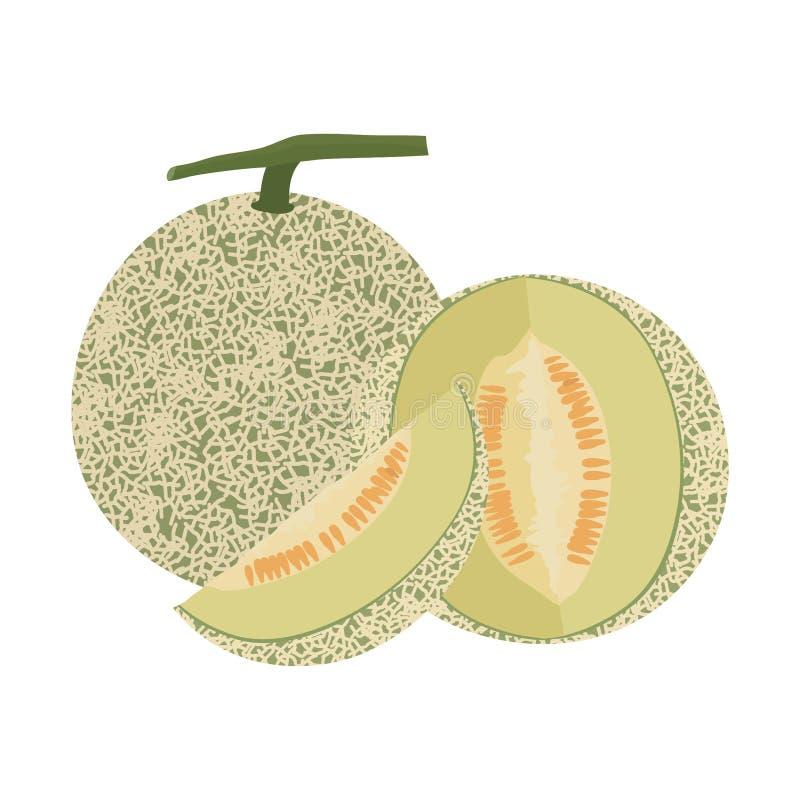 Cantaloupe melon fruit vector illustration royalty free stock photos