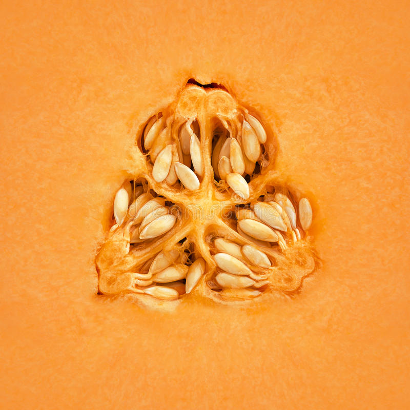 Download Cantaloupe Melon Inside stock image. Image of section - 24767713
