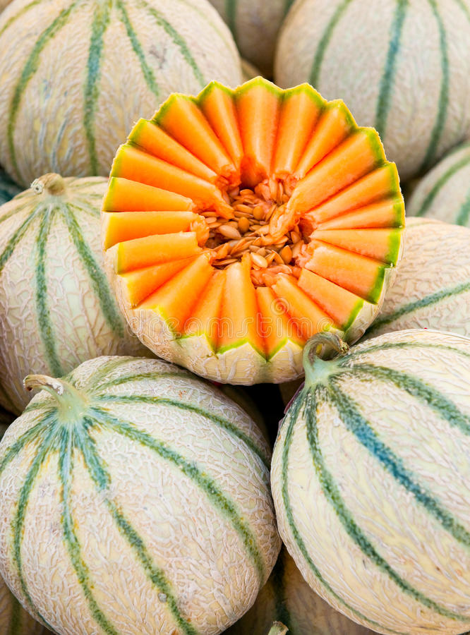 Download Cantaloupe melons stock photo. Image of market, delicious - 10170216