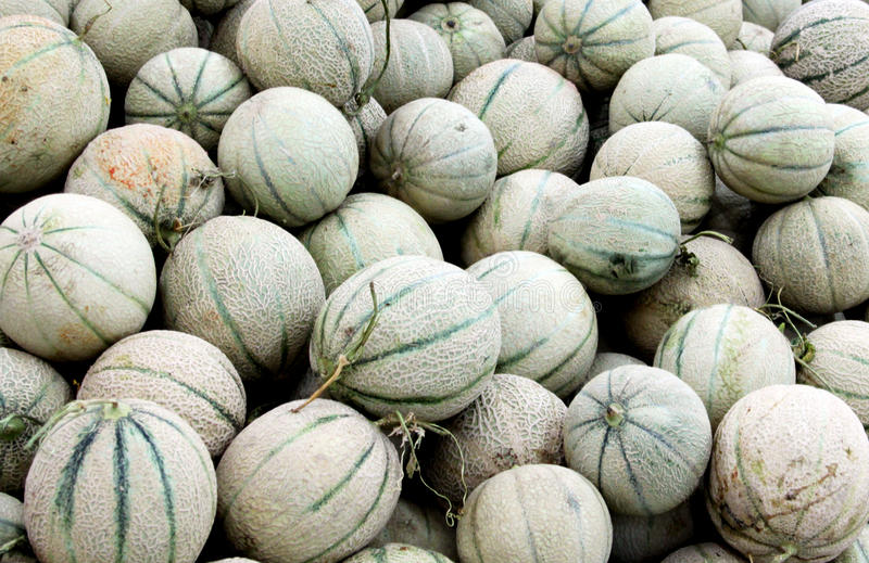 Cantaloupe melons. Heap of cantaloupe melons in the shop stock image