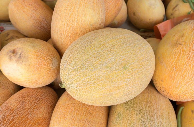 Cantaloupe melons at organic farmers market stock photo