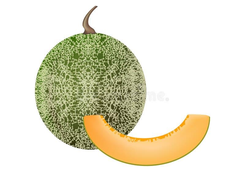 Download Cantaloupe stock vector. Image of dessert, fruit, recipe - 32221965