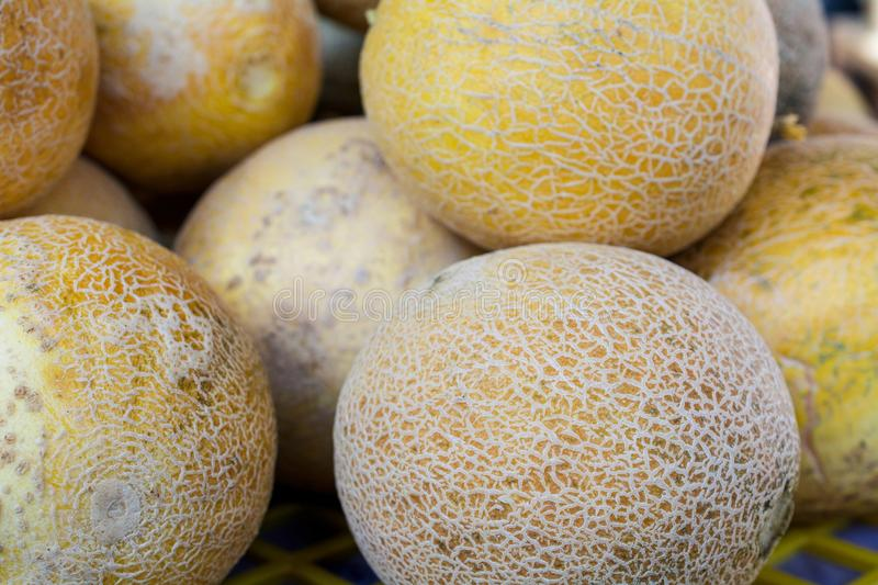 Cantaloupes in the market stock photography