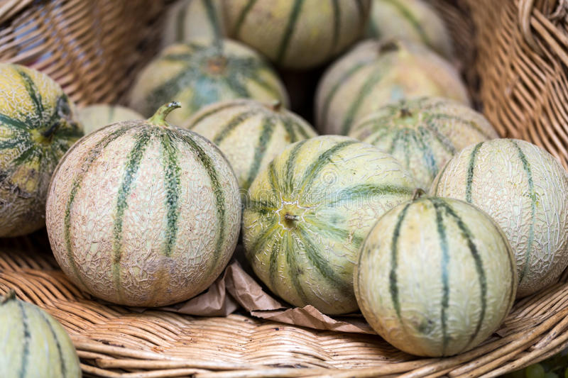 Cantaloupes Melons royalty free stock photography