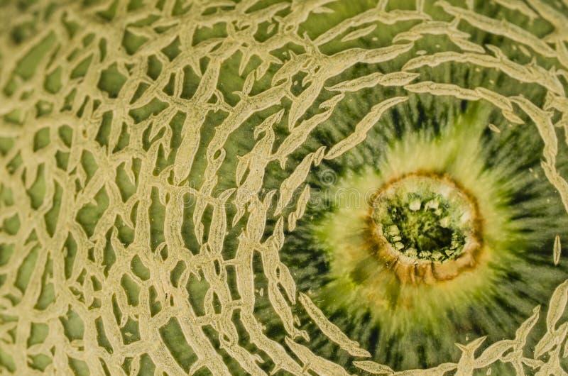 Cantaloupmelonmelonnärbild royaltyfri fotografi