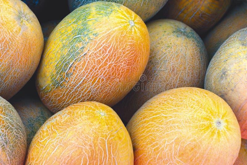 Cantalupo fresco foto de archivo libre de regalías