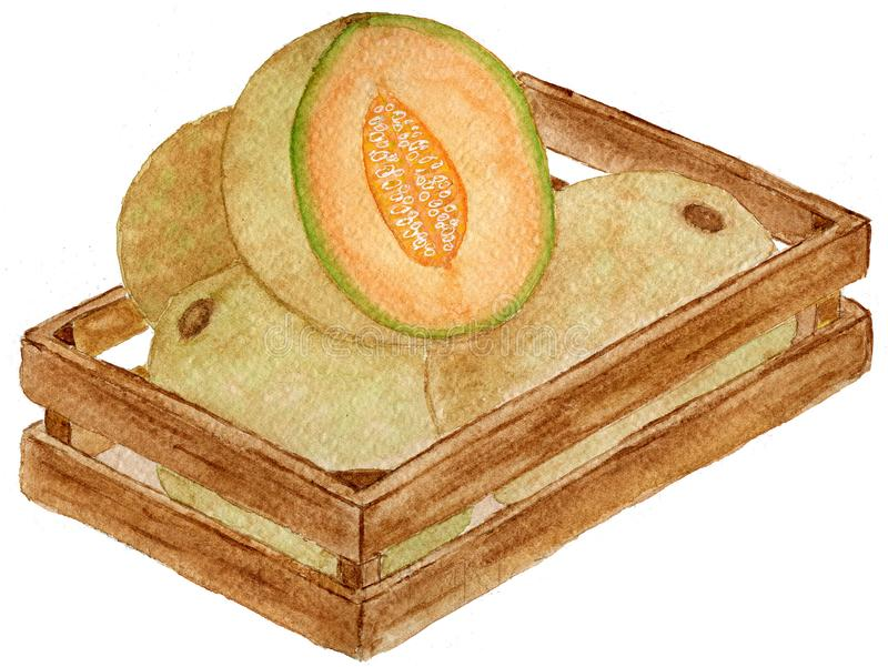 Cantalupo mexicano delicioso ilustração stock