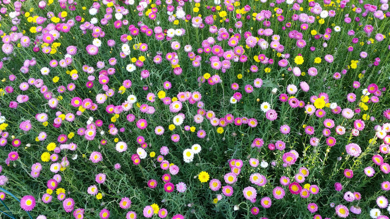 Download Canteiro De Flores Colorido Em Sydney Botanical Garden Foto de Stock - Imagem de campo, botanical: 65581128
