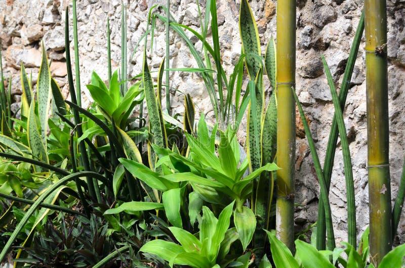 Canteiro de flores com as plantas tropicais e bambu verdes ao longo da parede de pedra fotografia de stock