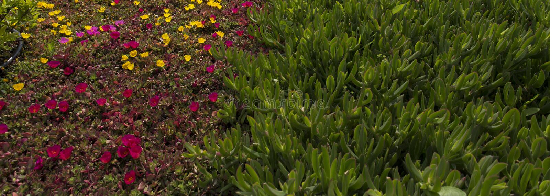 Canteiro de flores de flores coloridas imagem de stock royalty free