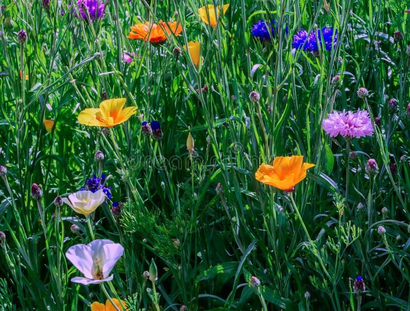 Canteiro de flores de junho fotos de stock