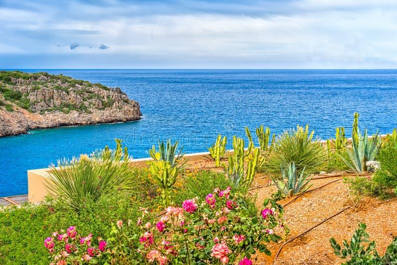 Canteiro de flores de florescência em um fundo da paisagem do mar, Grécia imagens de stock royalty free