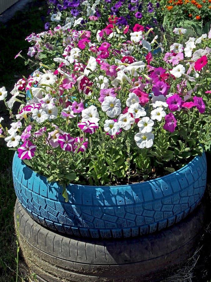 Canteiro de flores pequeno arranjado em pneus velhos fotos de stock