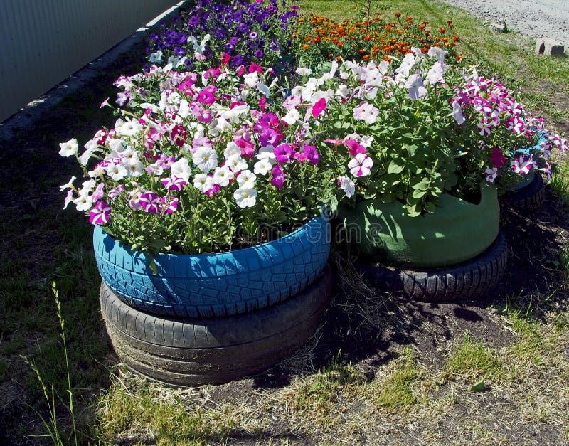 Canteiro de flores pequeno arranjado em pneus velhos fotos de stock royalty free
