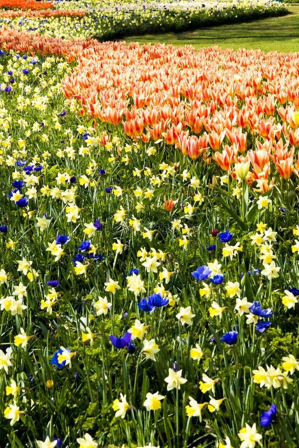 Canteiros de flores bonitos Keukenhof imagens de stock royalty free