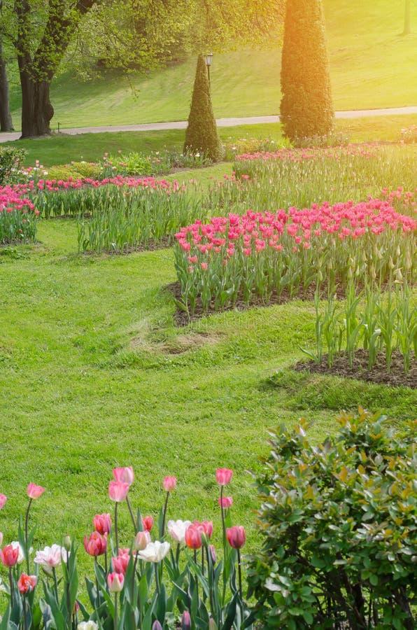 Canteiros de flores coloridos e caminho da grama do enrolamento foto de stock royalty free