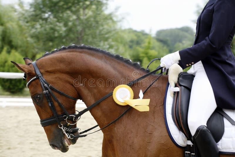 Canter för häst för utmärkelsevinnaredressyr med hennes stolta ryttare utomhus royaltyfri fotografi