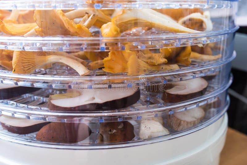 Cantharellen en porcinipaddestoelen in het dehydratatietoestel royalty-vrije stock afbeelding