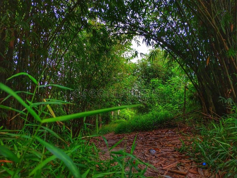 Cantik de bambu de yang foto de stock