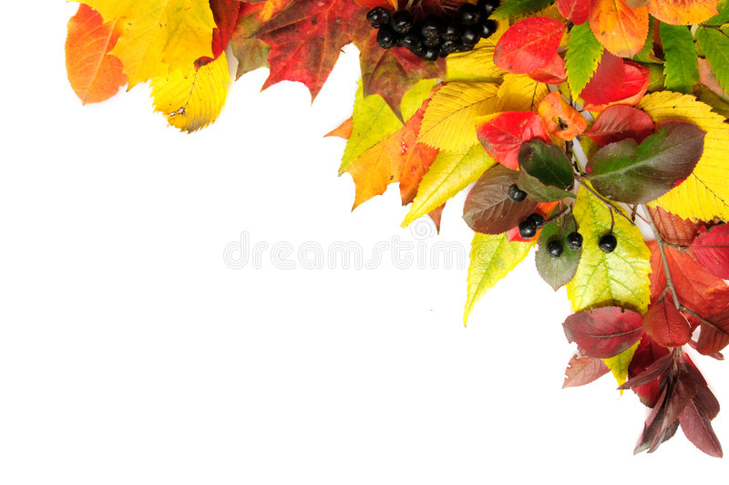Canto das folhas de outono fotos de stock royalty free
