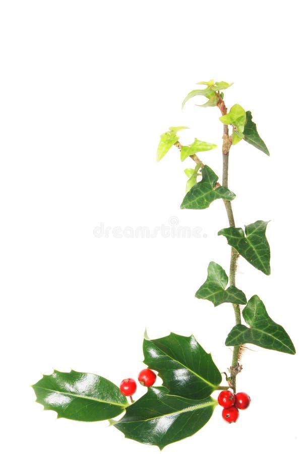 Canto do azevinho e da hera foto de stock