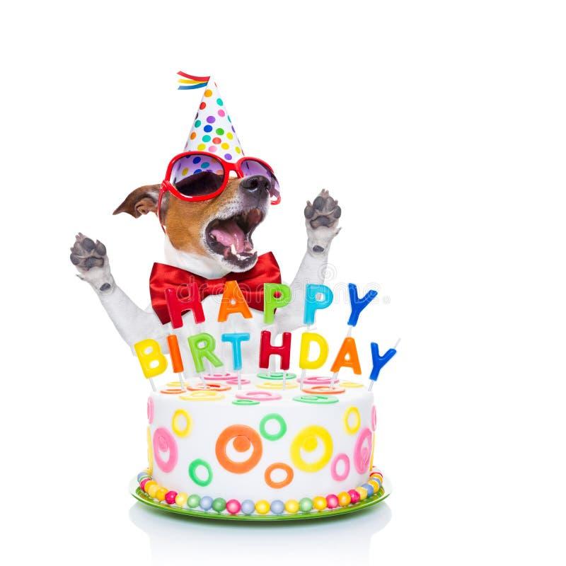 Canto do cão do feliz aniversario fotos de stock royalty free