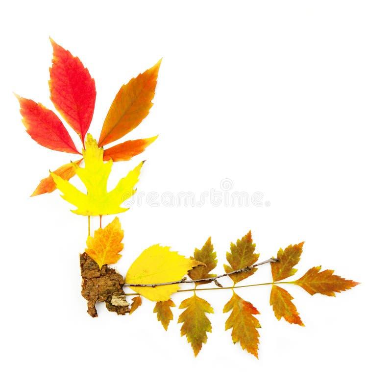 Canto do frame do outono/folhas reais bonitas imagem de stock