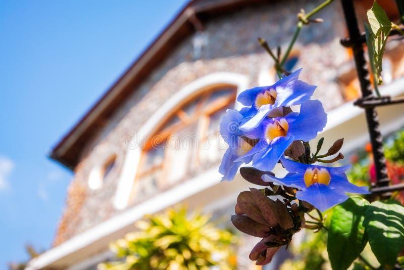 Canto encantador de um jardim em um recurso de Atitlan do lago imagem de stock