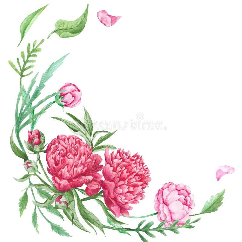 Canto floral do verão da peônia ilustração do vetor