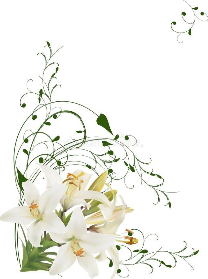 Canto floral isolado dos lírios brancos ilustração stock