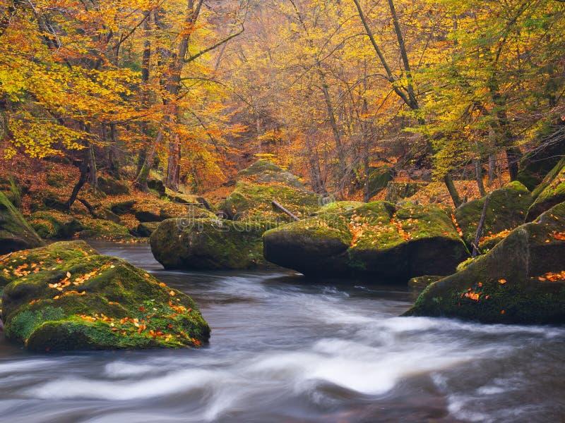 Cantos rodados grandes con las hojas caidas Orillas del río de la montaña del otoño Grava y cantos rodados cubiertos de musgo ver imagenes de archivo