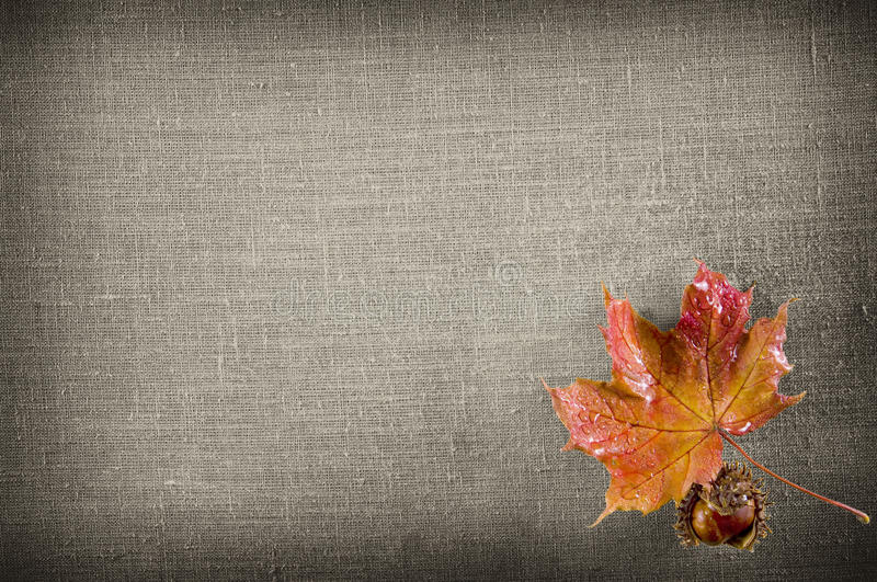 Download Canvas stock photo. Image of cracked, chestnut, linen - 21495386