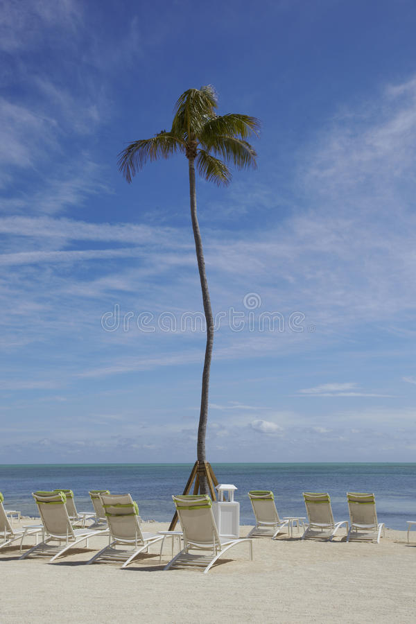 Canvas Chairs and palms