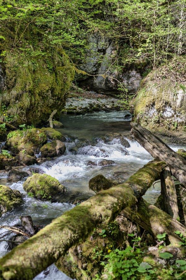 Canyon célèbre de Galbena en Transylvanie photo libre de droits