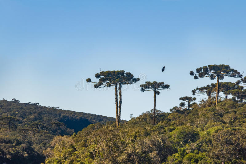 Canyon d'Itaimbezinho chez Aparados DA Serra National Park - Cambara font Sul, Rio Grande do Sul, Brésil images libres de droits