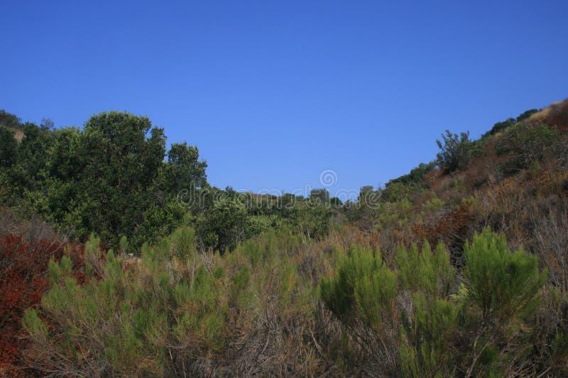Canyon de Gonzalez photo libre de droits