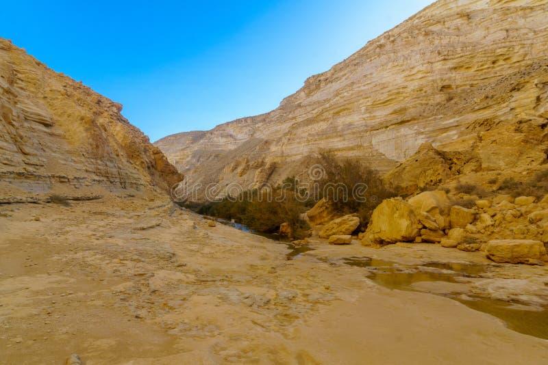 Canyon del parco nazionale di Ein Avdat, il deserto di Negev fotografia stock