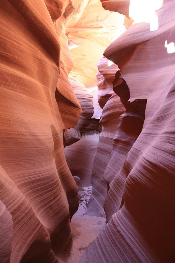 Canyon del sud dell'antilope immagine stock