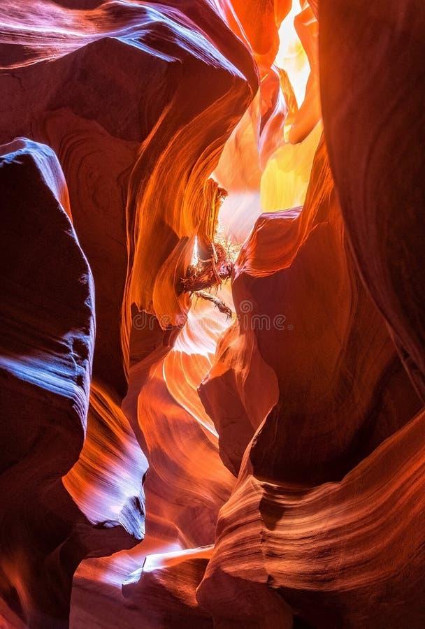 Canyon dell'antilope - legname galleggiante qui sopra fotografia stock