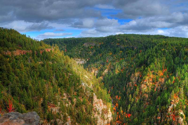 Canyon dell'insenatura della quercia in autunno fotografie stock libere da diritti