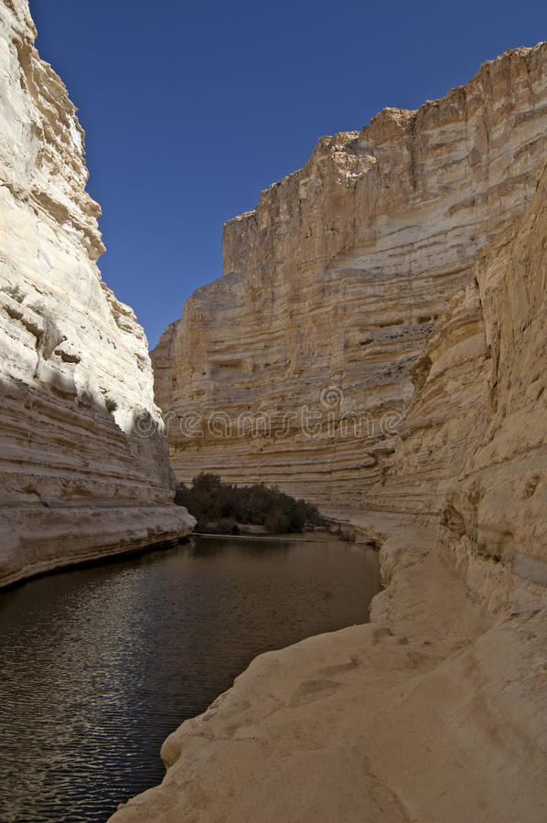 Canyon in the desert royalty free stock image