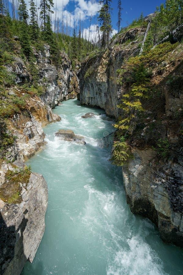 Canyon di marmo nel parco nazionale di Kootenay fotografie stock libere da diritti