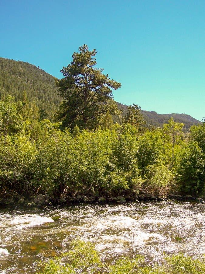 Canyon di Poudre, vista del fiume Colorado fotografia stock
