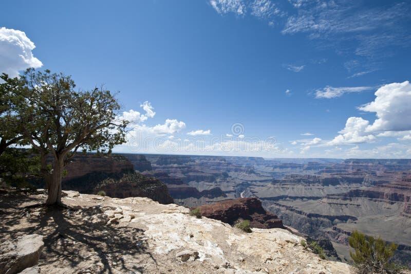 Canyon grand photos stock